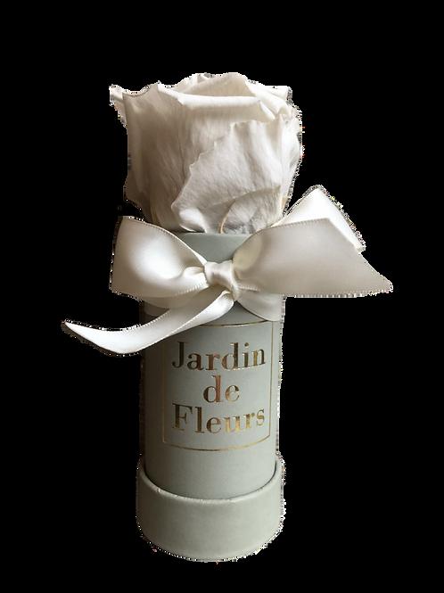 Flowerbox Mini Infinity Rose ivory