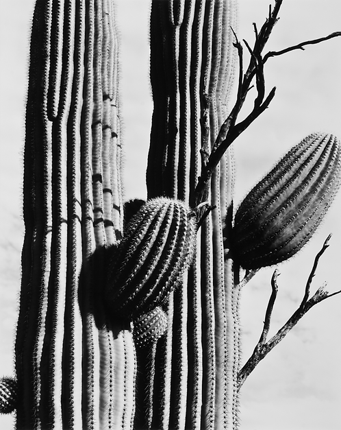 Saguaro National Park, AZ, 2015