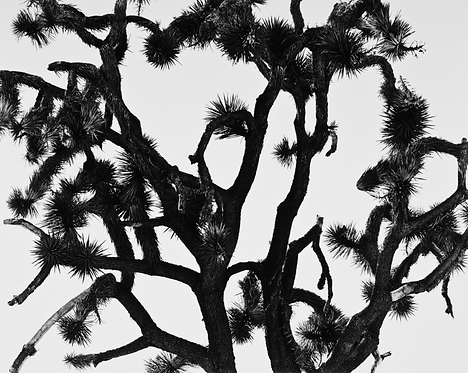 Joshua Tree National Park, CA, 2015
