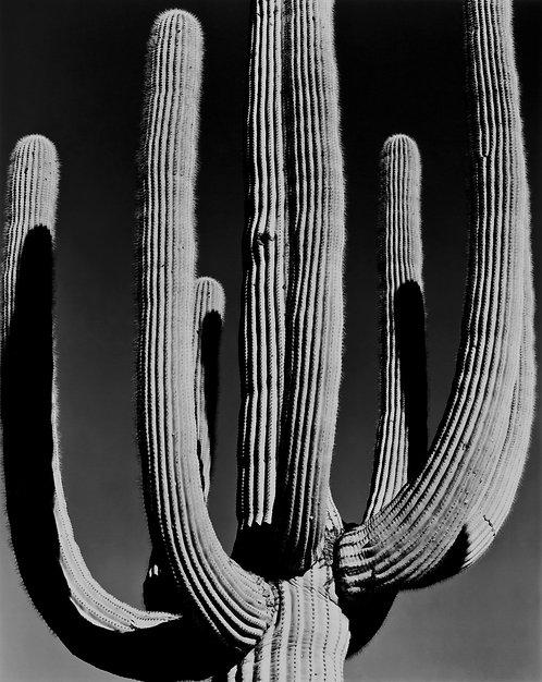 Saguaro National Park, AZ, 2017