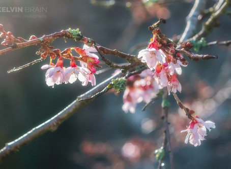 Spring has sprung in the Brecon Beacons