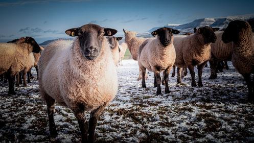 Meet the Brecon Beacons Wildlife