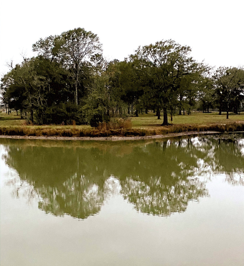 Pond%20green%20living%20at%20dogtrot%20a