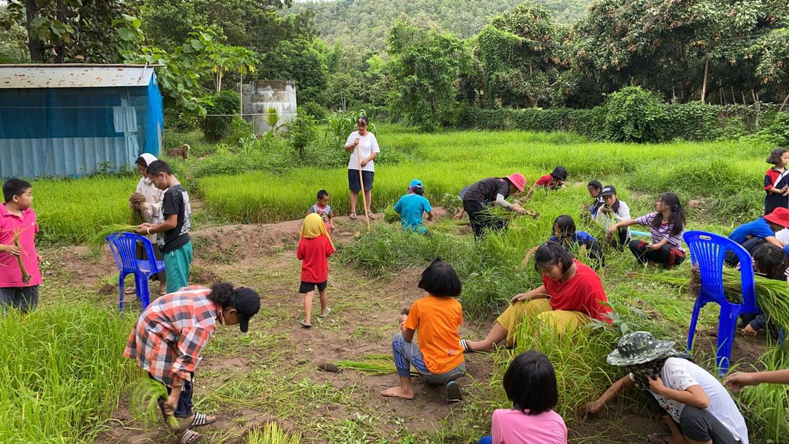 Preparing to transport the rice seedlings
