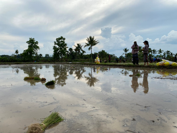 Flood our rice fields