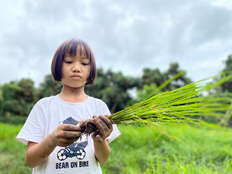 She is learning fast the ways of rice planting