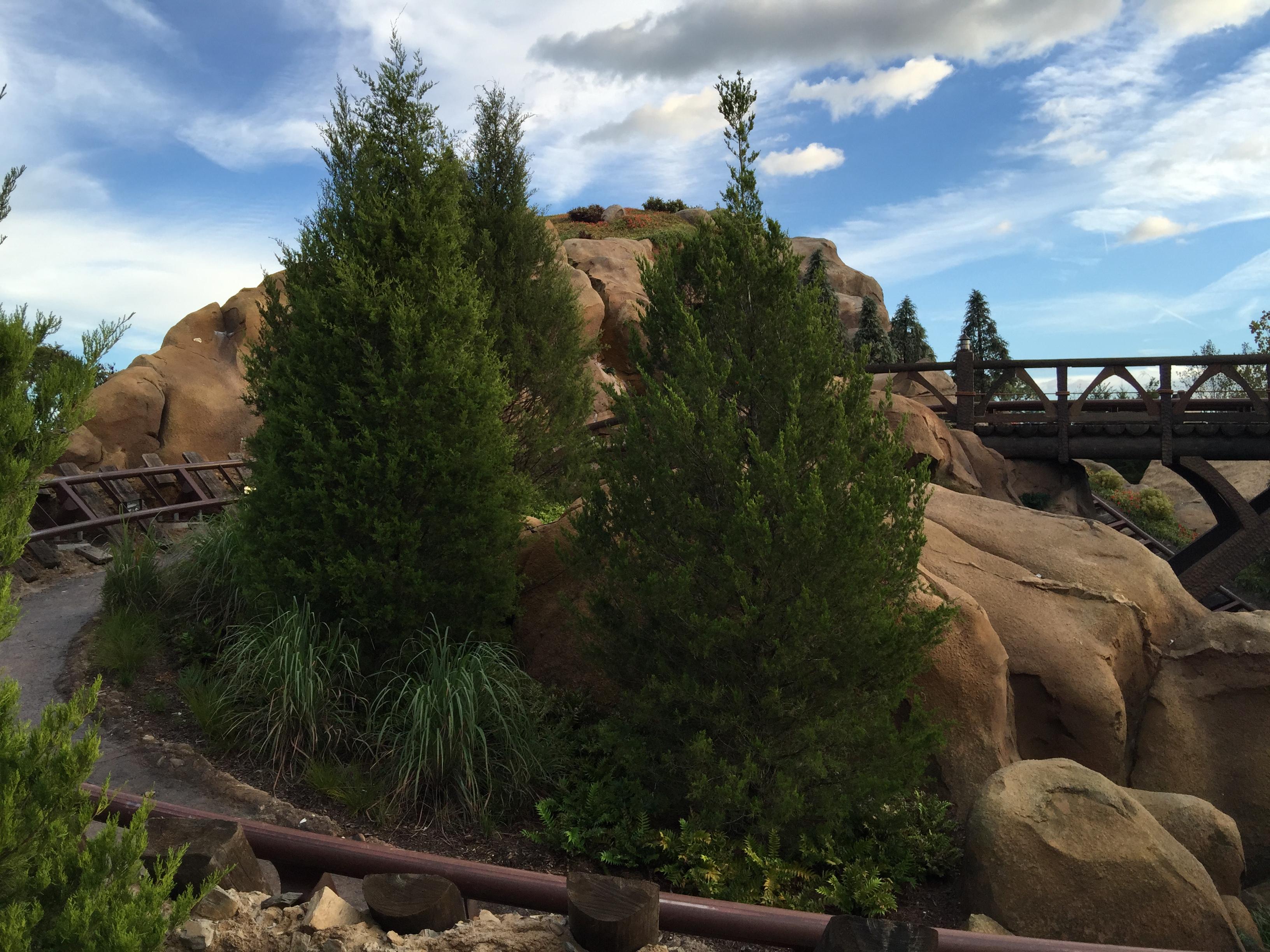 Juniperus virginiana silicicola
