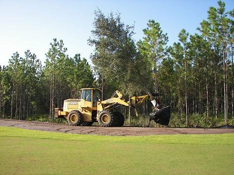 Loader moving large live oak to installation site
