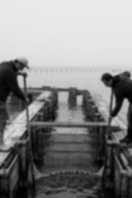 pesca anguille comacchio_ph elena fabriz