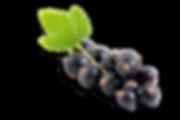 Black-Currant-3trans.png