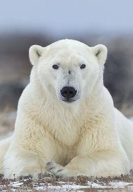 bear32.jpg
