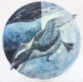 カンムリウミスズメのコピー.jpg