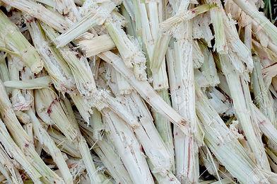 25991199-group-of-sugarcane-bagasse.jpg