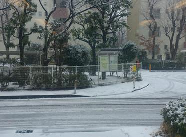 雪ですね…