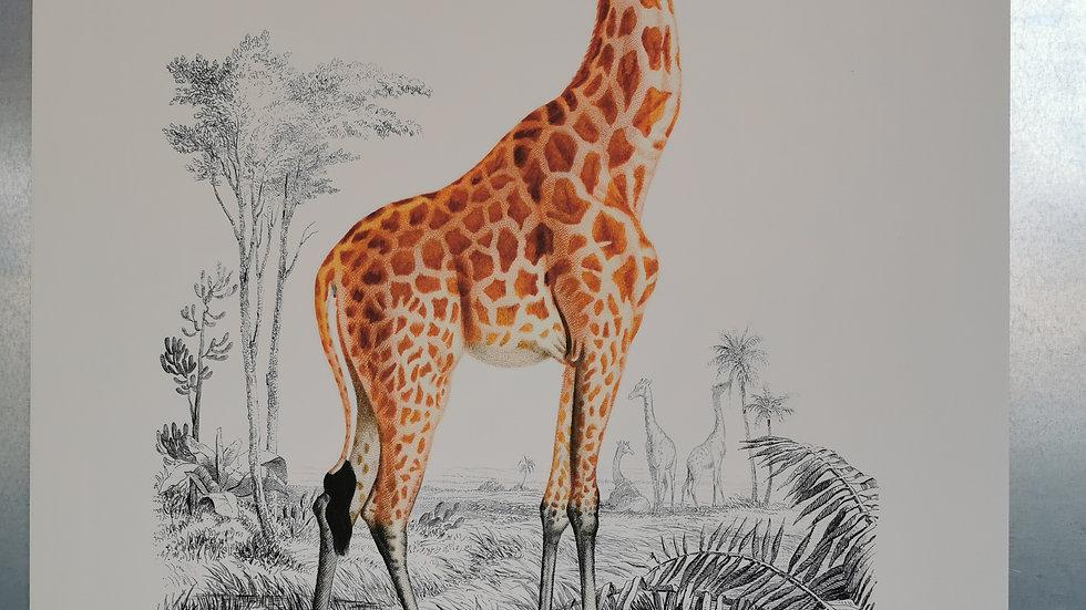 Affiche la giraffe