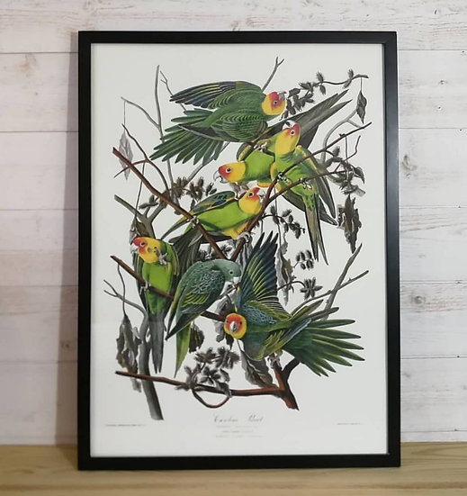 Affiche parrots