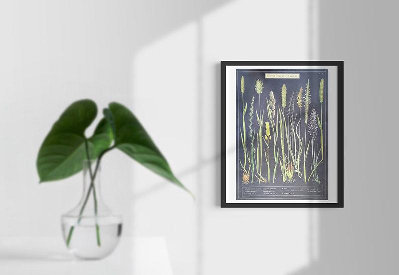 Affiche British Plant