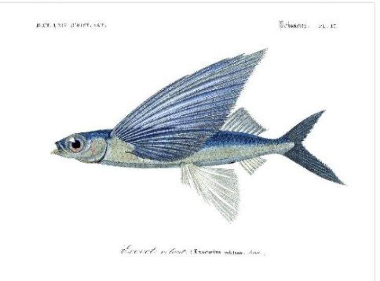 Affiche poisson volant