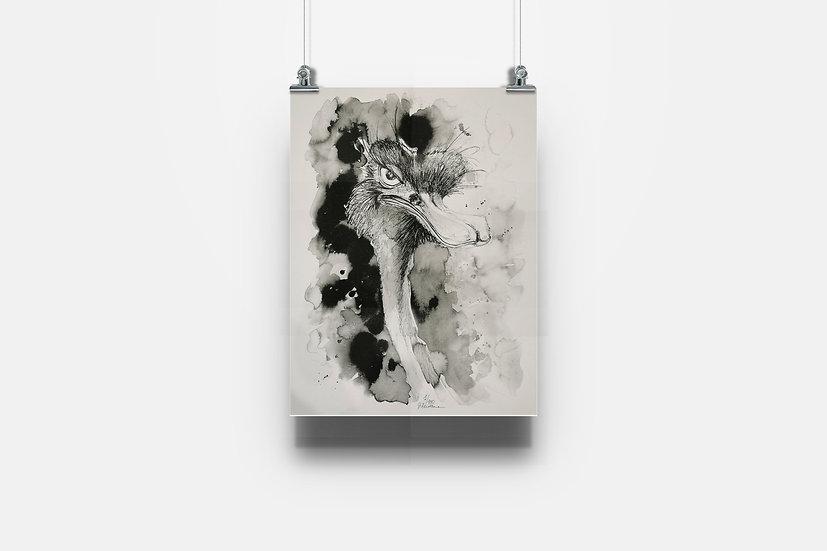 Affiche autruche