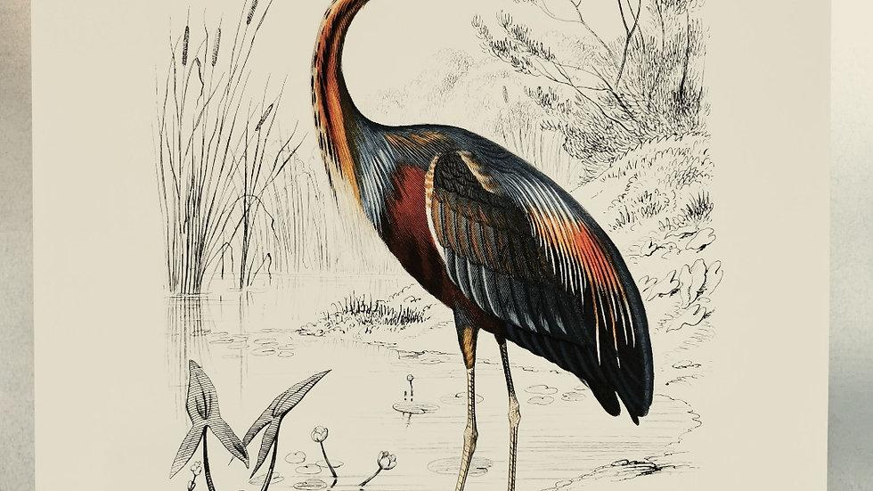 Affiche heron