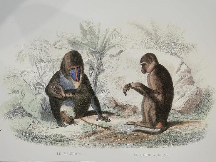 Lot de 2 affiches deco singes