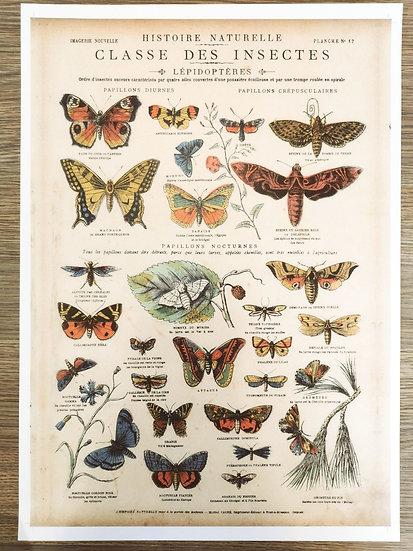 Affiche planche insectes papillons