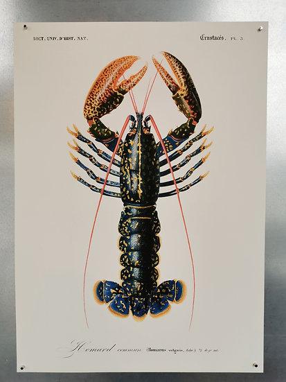 Affiche homard