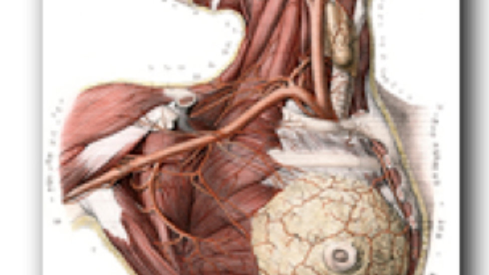 Affiche anatomie