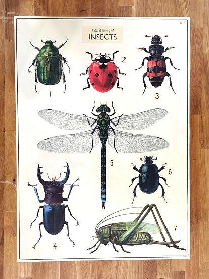 Affiche planche insectes