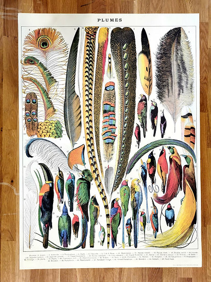 Affiche plumes