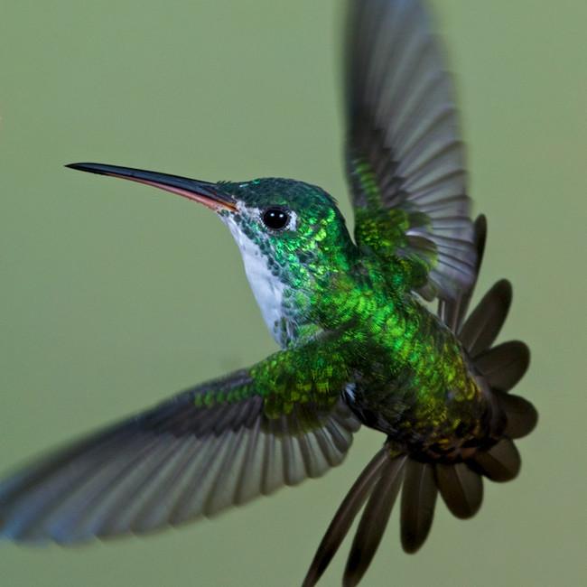 Wildlife - Ecuador hummingbird