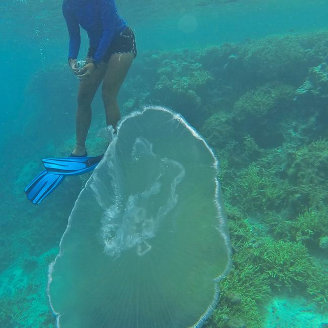 Wildlife Micronesia: Nukuoro Atoll - Sno