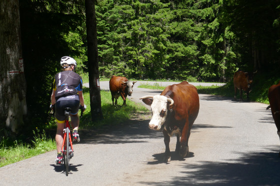How to cycle the Tour de France's loftiest peaks ... and survive to tell the tale.