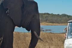 Africa - Zimbabwe - Sharon Pincott & Mis