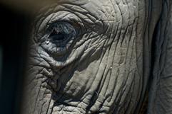 Africa - Zimbabwe - Close-Up - G-Family.