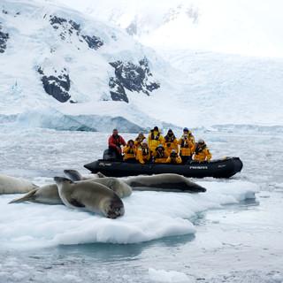 Wildlife Antarctica: Seals - Crabeaters