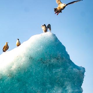 Wildlife Ice in Clarence Sound-5.jpg