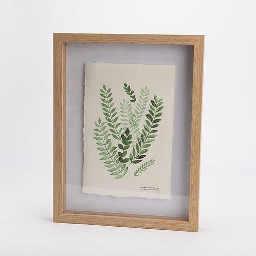 Cuadro hojas Olivo