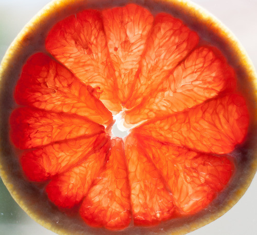 Ava-orange.jpg