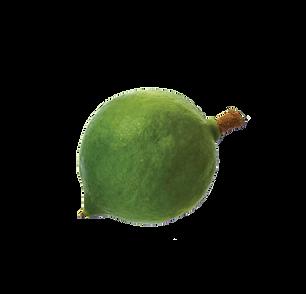 photodune-0Y1ncQwd-macadamia-nuts-isolat