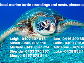 MARINE TURTLE CONTACT NUMBERS