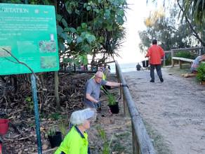 PBCA – Helping Peregian Beach fit into the bigger picture.