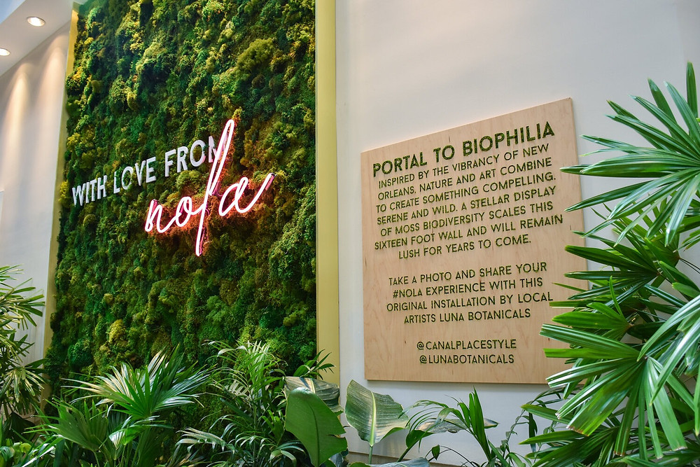 Biophilic wall in Canal Place, New Orleans, Design, Luna Botanicals