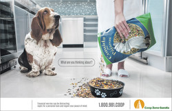 ZGANDIA-BIRD FOOD-DOG