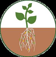 plante_detour.png