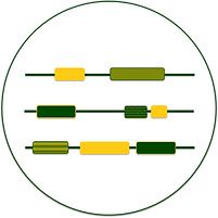 genes_b.png
