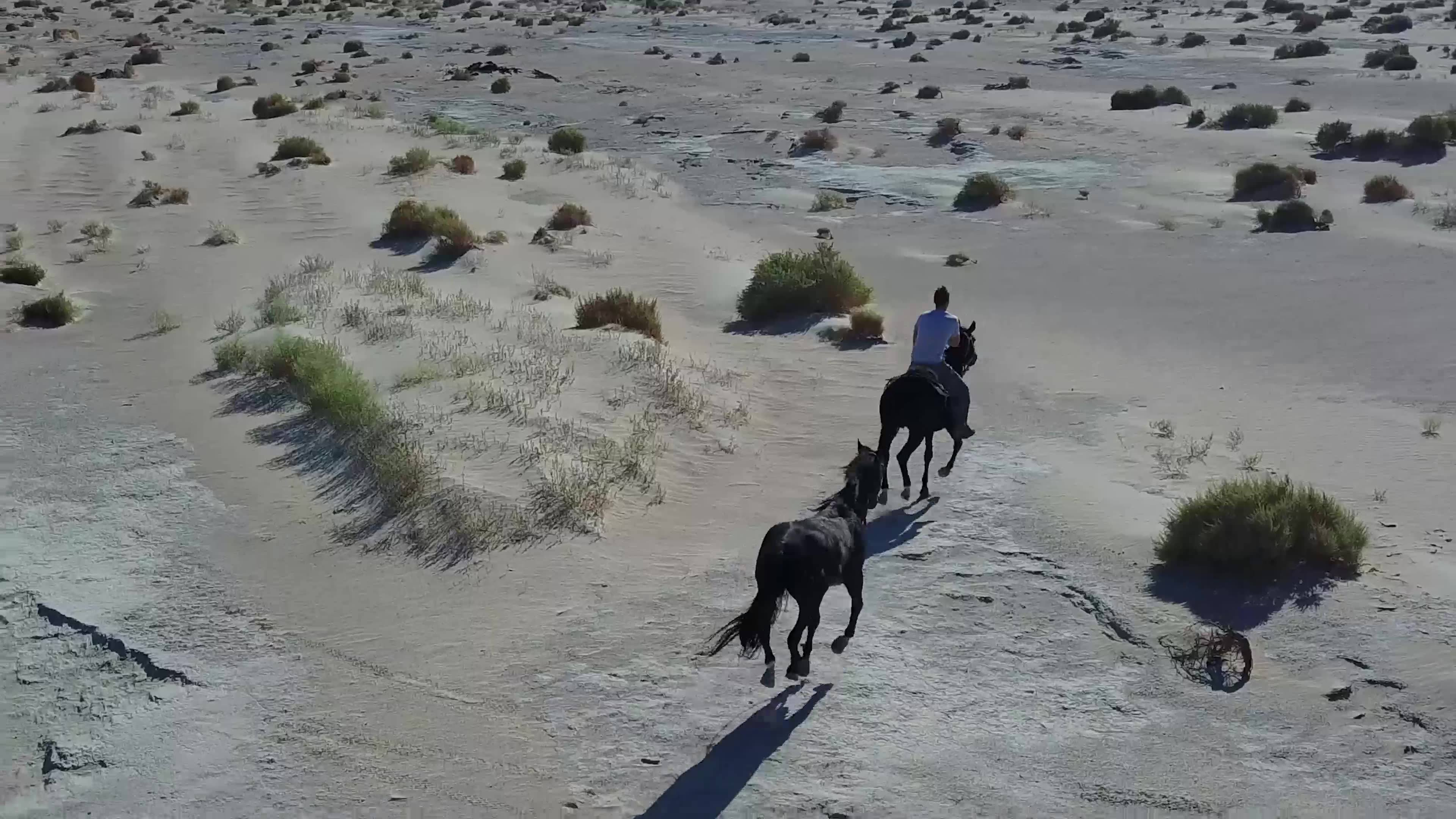 Horse Ride in the Desert