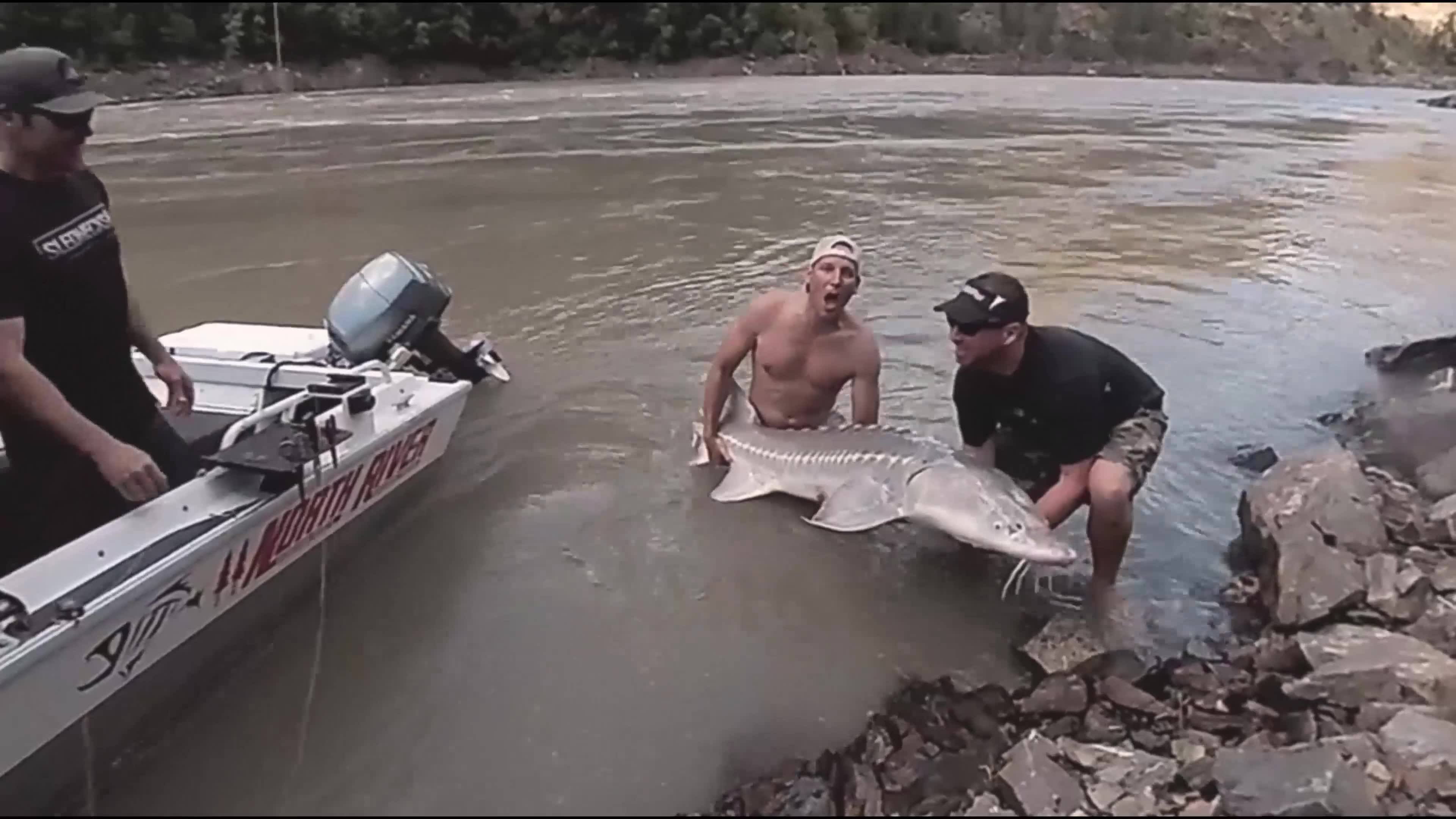 Crazy sturgeon fishing