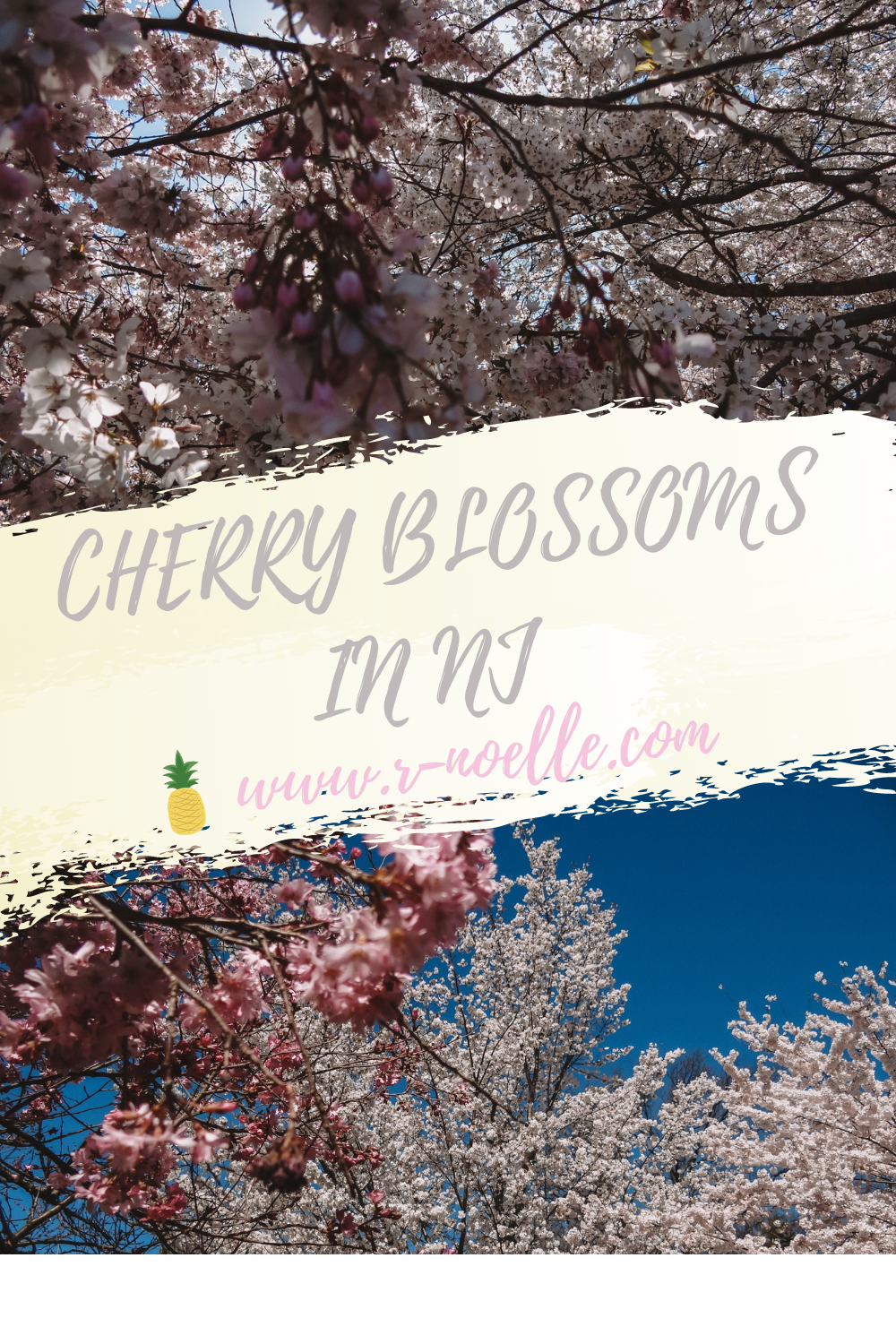 Branch Brook Park is famour for their cherry blossom festivals. Located in in Newark, New Jersey! Whether you drive, take the light rail, or bus to New Jersey it is worth the distance. There are more to see than cherry blossoms in DC!