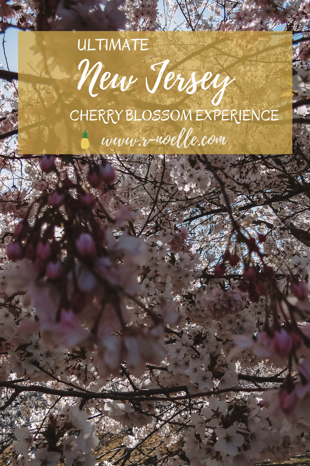 Branch Brook Park is famous for their cherry blossom festivals. Located in in Newark, New Jersey! Whether you drive, take the light rail, or bus to New Jersey it is worth the distance. There are more to see than cherry blossoms in DC!